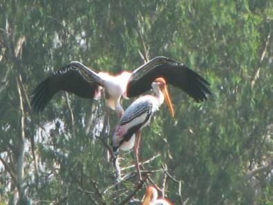 Migratory birds Palace Lake